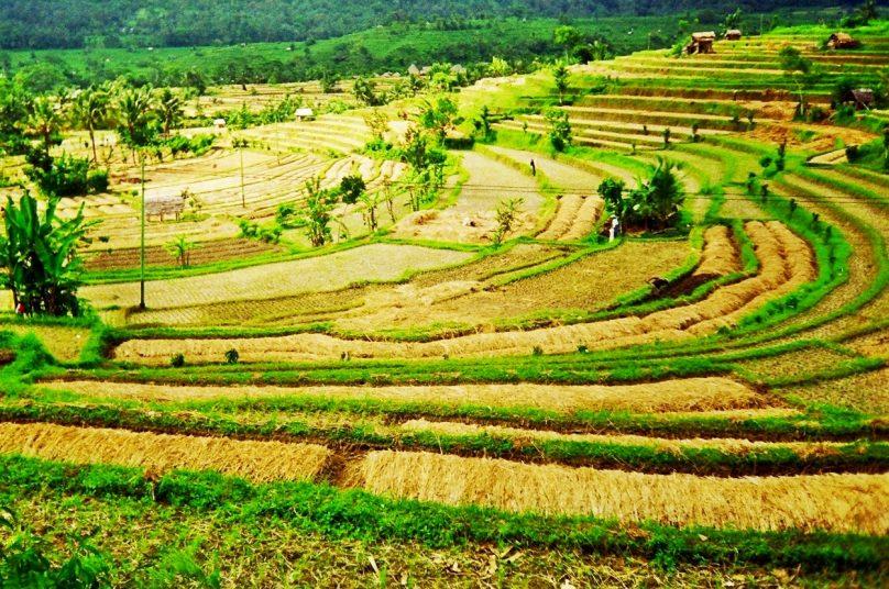 Bali_61
