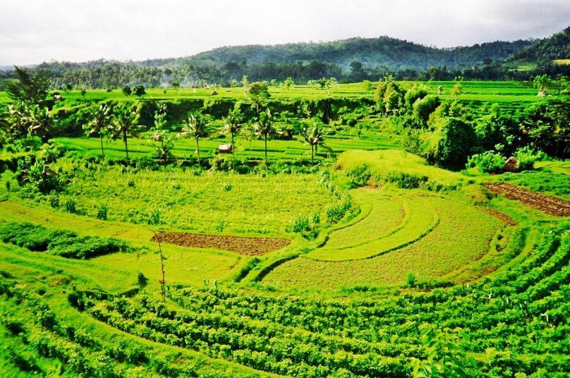 Subak (Subdistrito de Bali, Indonesia)