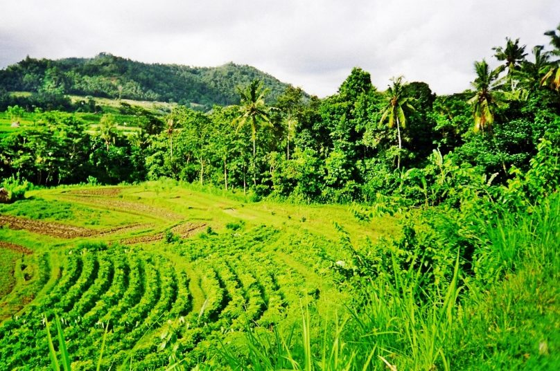 15 excusas para volver a Bali