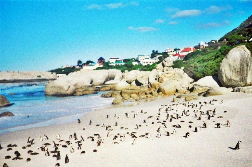 Boulders Beach (Provincia de Western Cape, Sudáfrica)