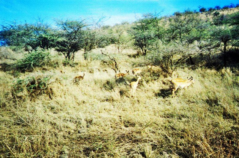 Serengeti_04