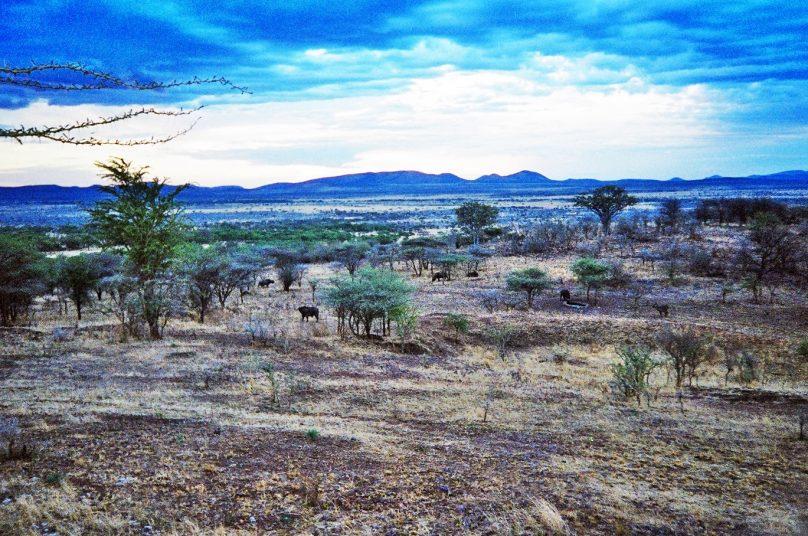 Serengeti_31