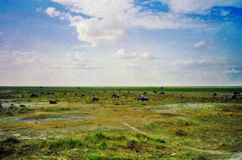 Amboseli_05