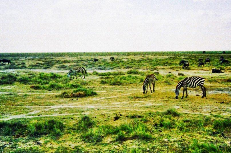 Amboseli (Condado de Kajiado, Kenia)
