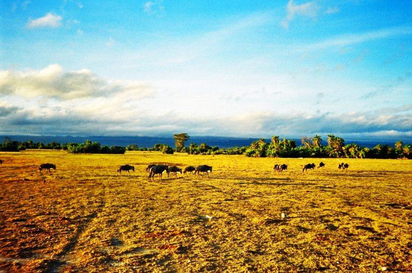 Amboseli_21