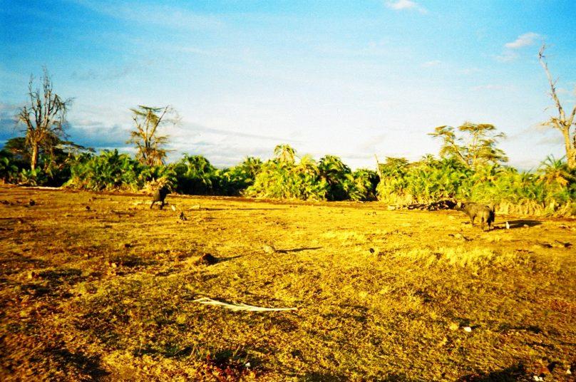 Amboseli_22