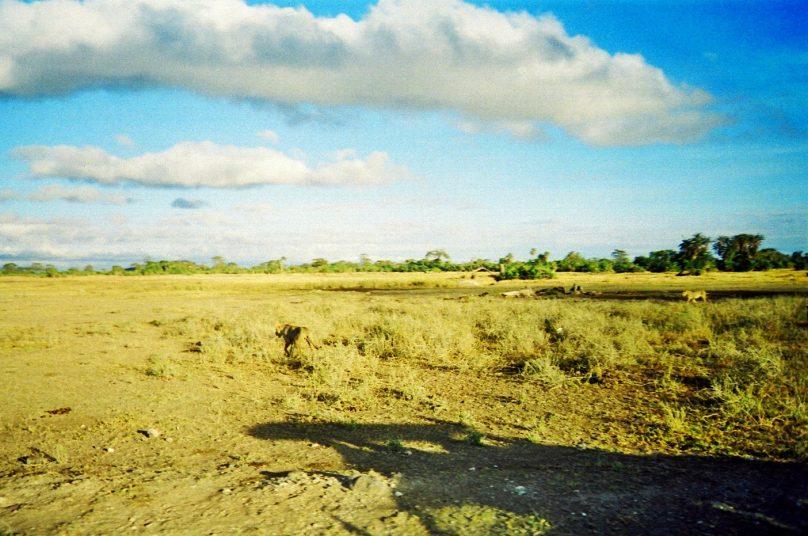 Amboseli_25
