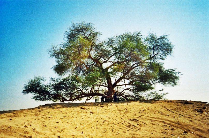 Árbol de la vida (Gobernación del Sur, Bahréin)