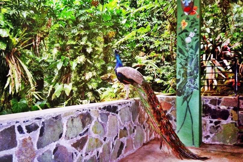 Papillote Wilderness Retreat (Parroquia de Saint George, Dominica)
