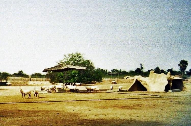 al-Maha (Municipio de Ar Rayyan, Qatar)