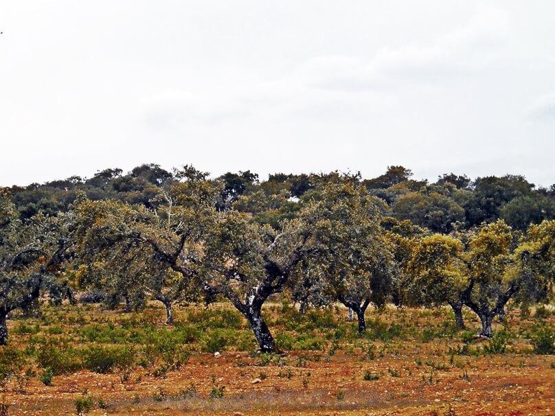 Sierra de San Pedro (Extremadura)