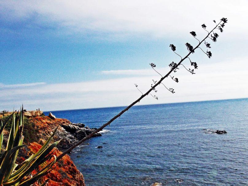 Cabo de Palos-Islas Hormigas (Municipio de Cartagena, Región de Murcia)