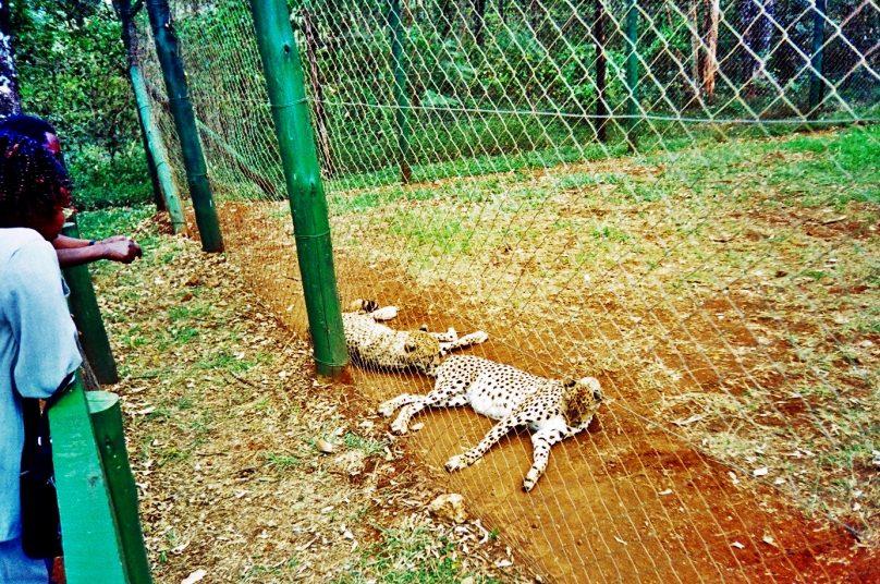 Orfanato Animal (Condado de Nairobi, Kenia)