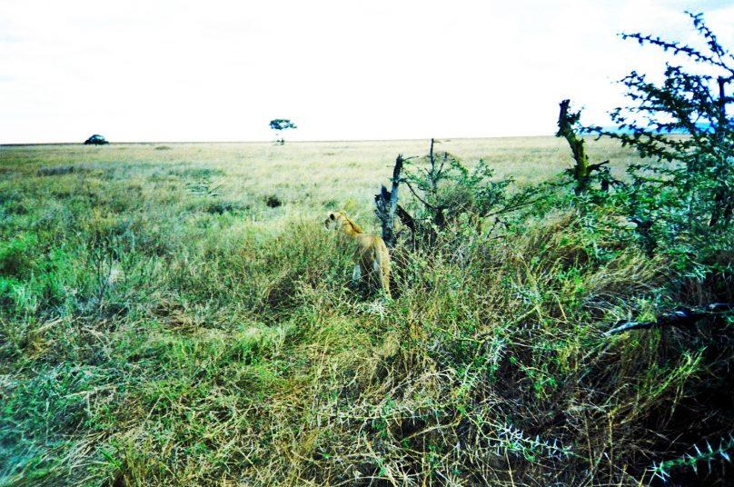 Serengeti_23