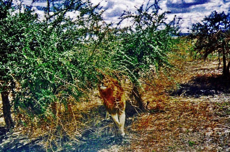Serengeti_27