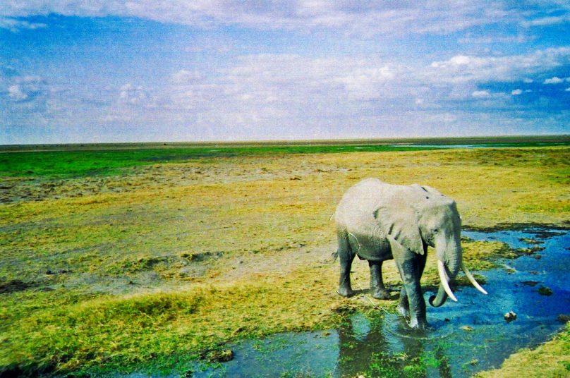 Amboseli_10