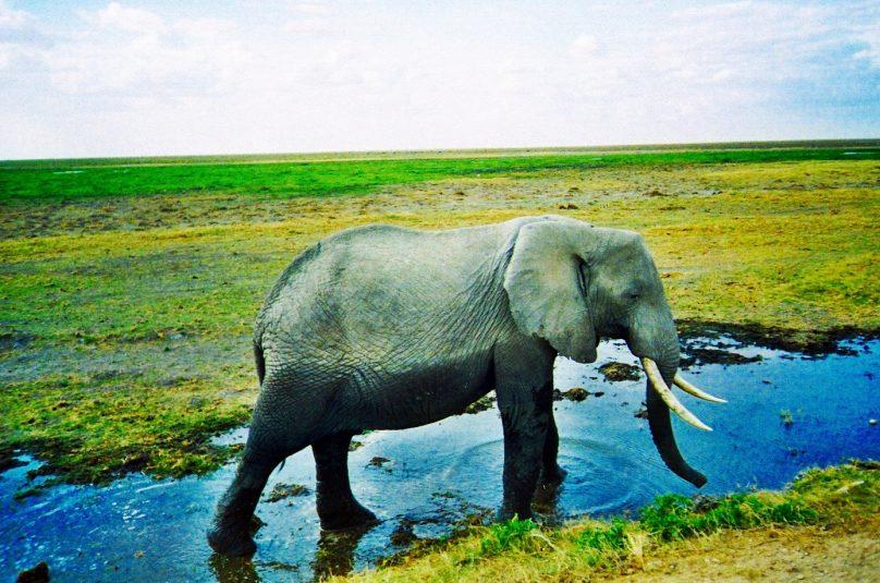 Amboseli_11