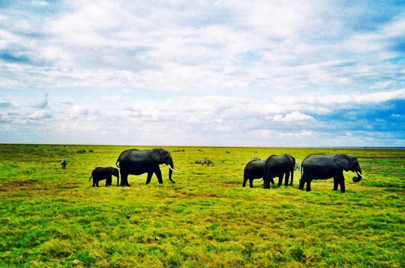 Amboseli_13
