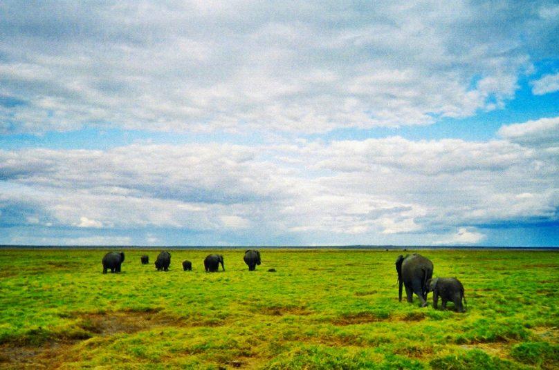 Amboseli_14