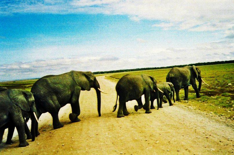 Amboseli_39