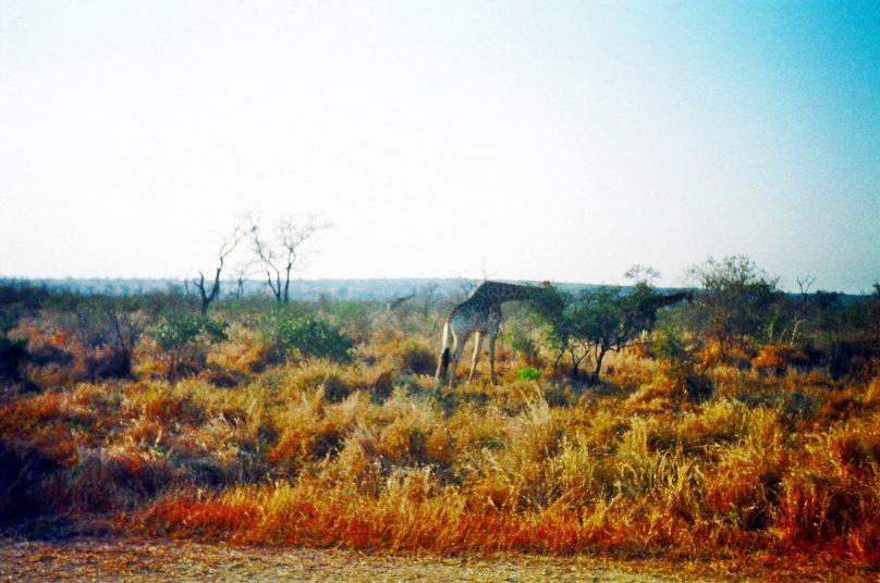 Kruger_15
