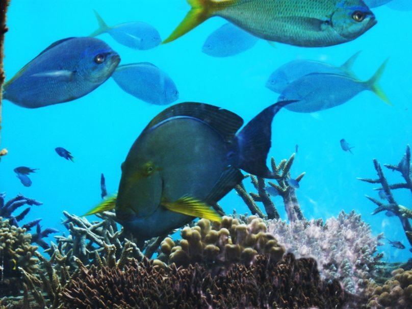 Gran barrera de coral (Estado de Queensland, Australia)