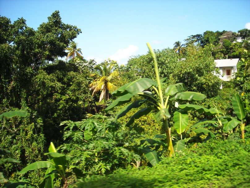 Grenada_86