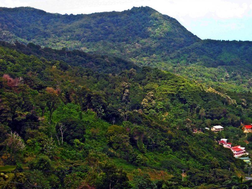 Main Ridge Forest Reserve (Región autónoma de Tobago, Trinidad y Tobago)