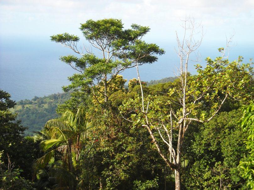 Tobago_80