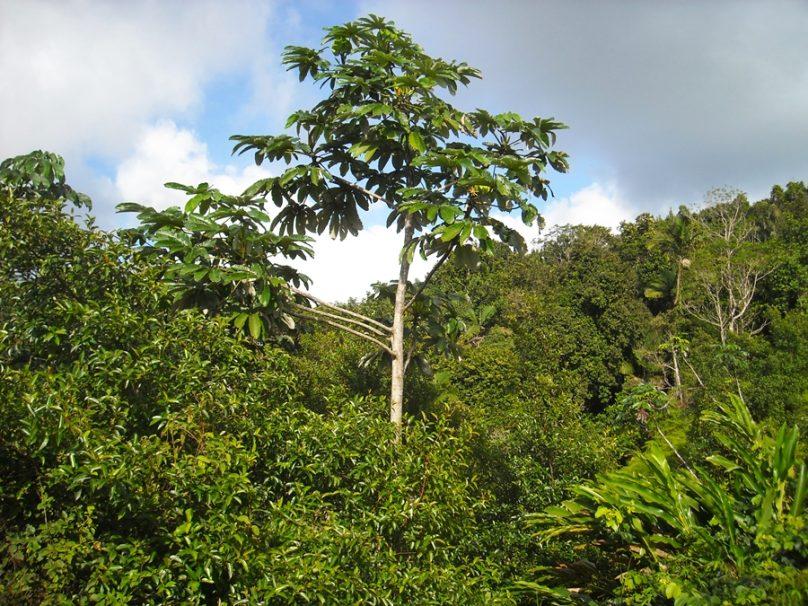 Tobago_81