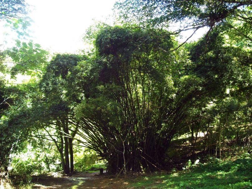 Tobago_37