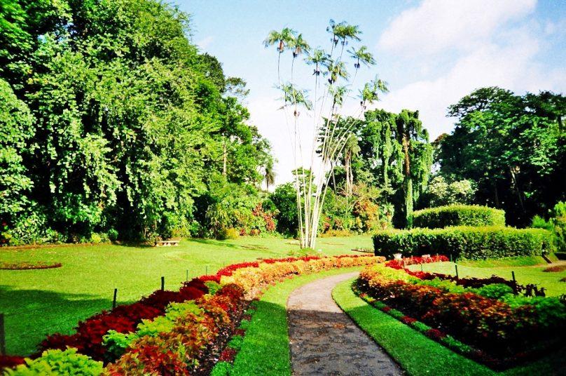 Peradeniya Garden (Distrito de Kandy, Sri Lanka)
