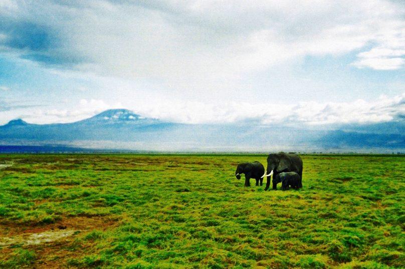 Amboseli_16