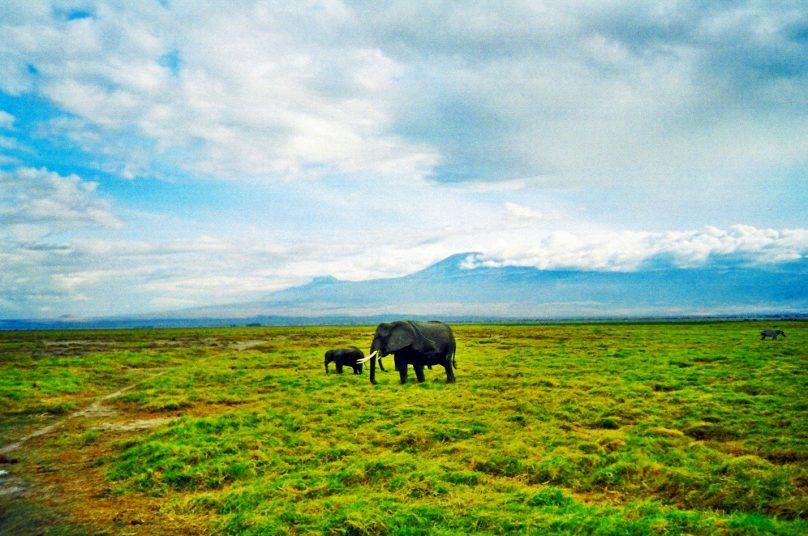 Amboseli_17