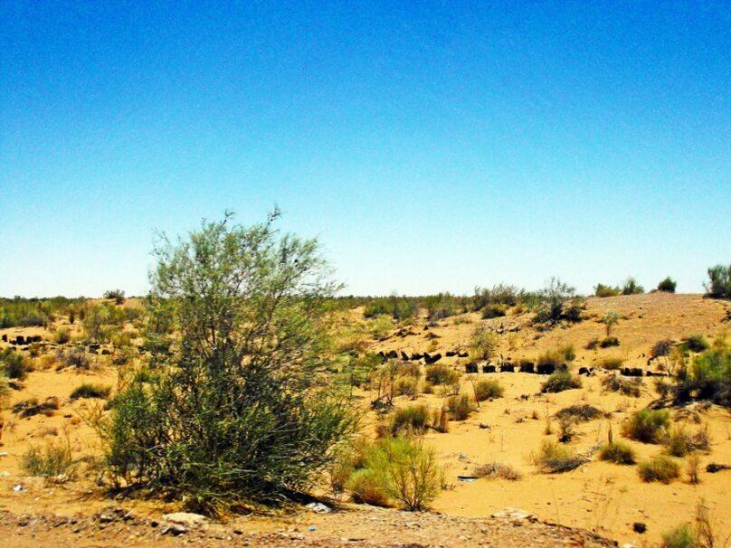 Desierto de Kyzylkum