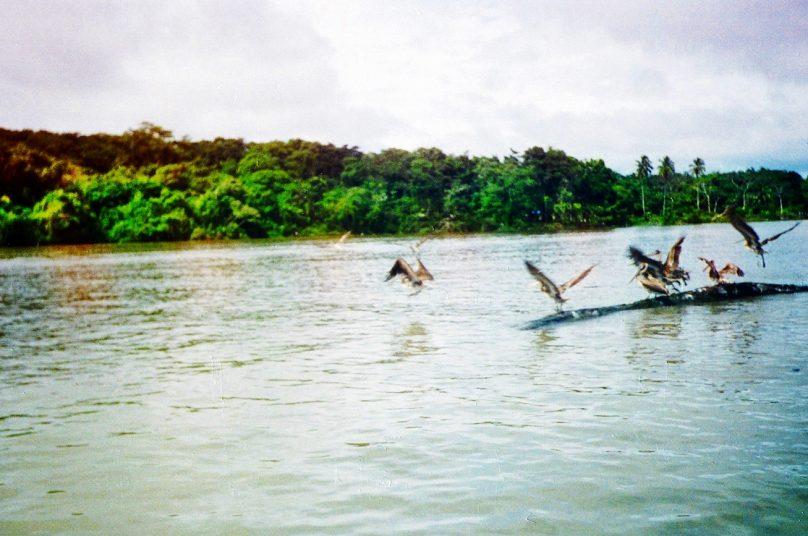 Isla Tortuguero (Provincia de Limón, Costa Rica)