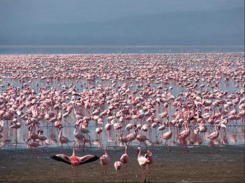 Lago Nakuru (por Jorge Sánchez)