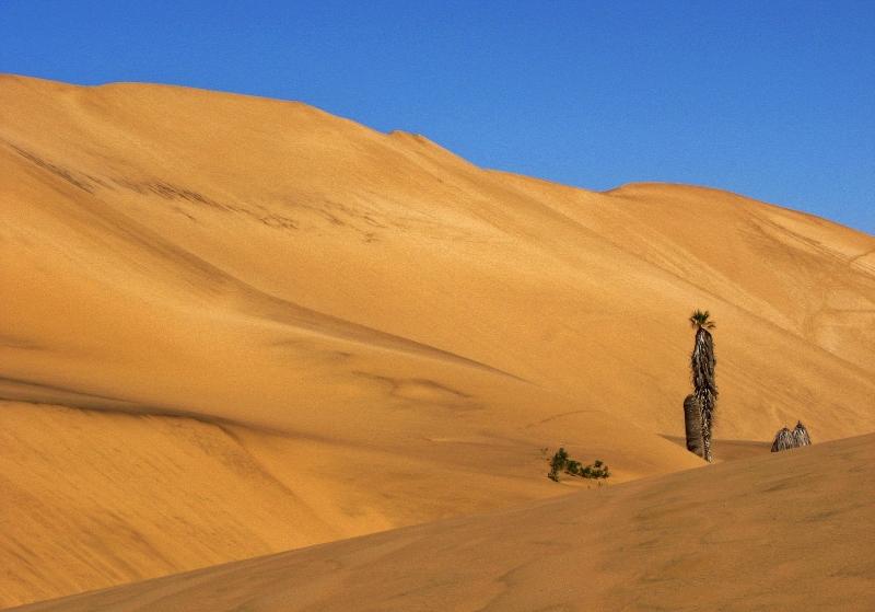 Desierto del Namib (por Jorge Sánchez)