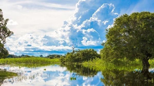 Pantanal (por Jorge Sánchez)