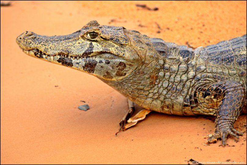 PantanalJorge_03