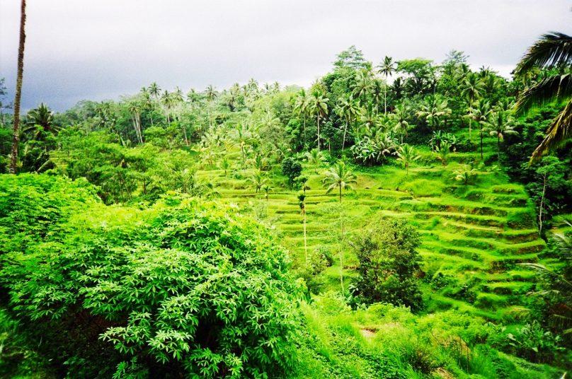 Bali_84