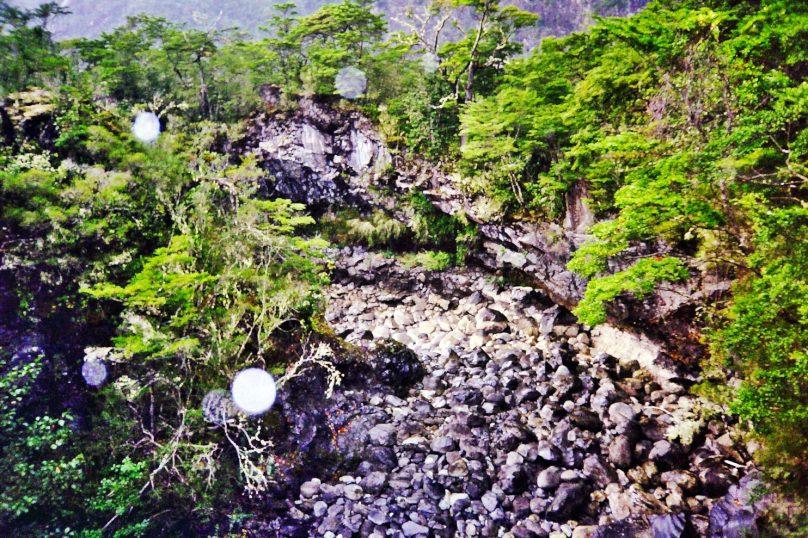 Bosques Templados Lluviosos de los Andes (Chile)