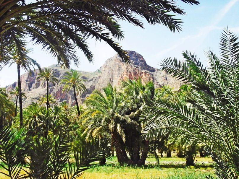 Palmeral de Orihuela (Orihuela, Comunidad Valenciana)