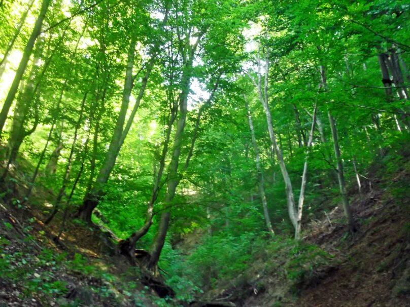 Bosques de Cozia (Vâlcea, Rumanía)