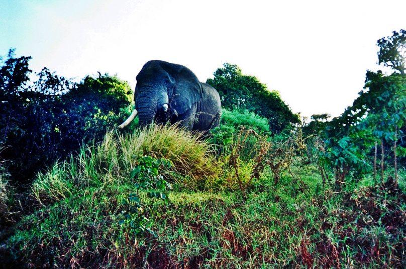 Zona de conservación de Ngorongoro (Región de Arusha, Tanzania)