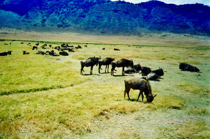 Ngorongoro_15