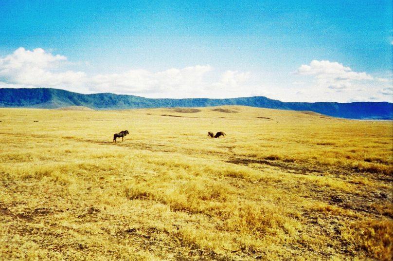 Ngorongoro_26