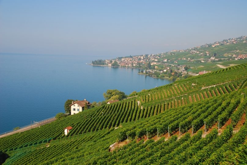 Viñedos de Lavaux (Cantón de Vaud, Suiza)