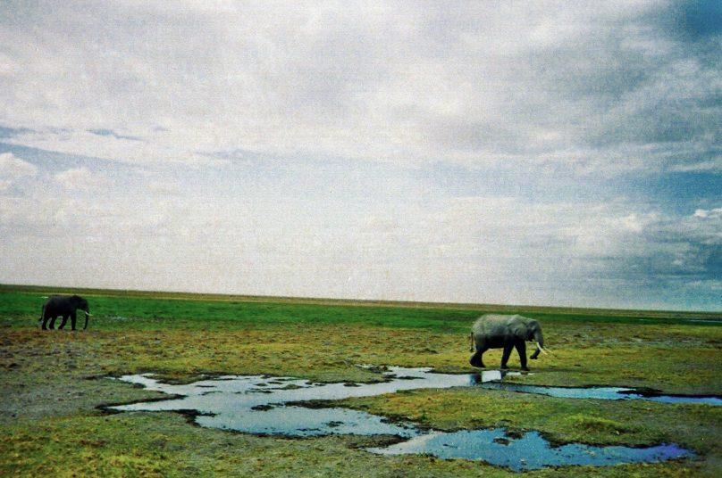 Amboseli_09
