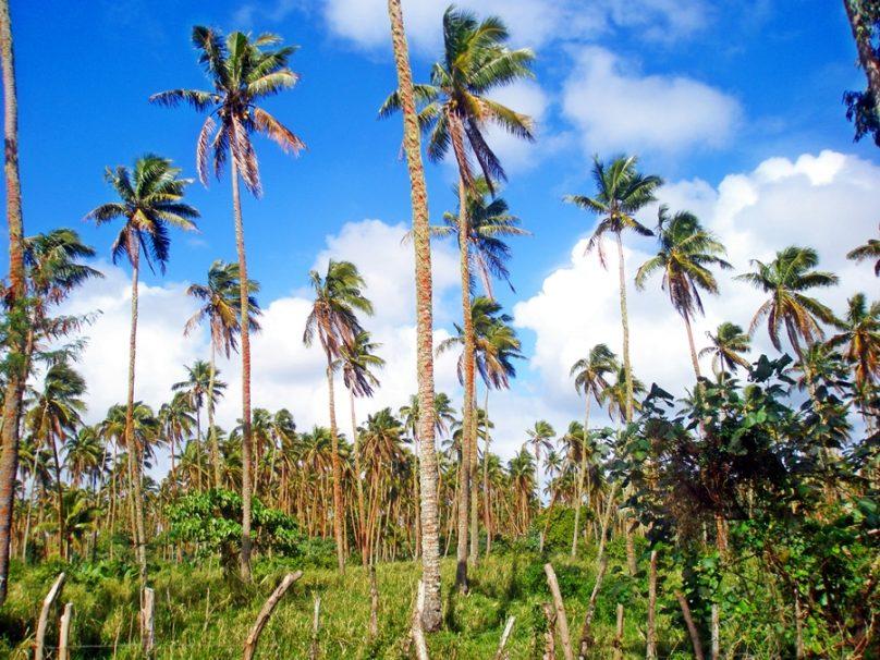 Tongatapu (Tonga)